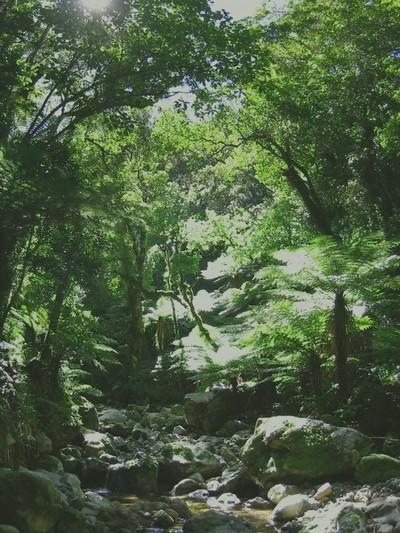Whakanui_creek_small